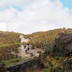 Parc national El Cajas