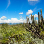 Les cactus en bord de piste