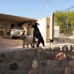 Une belle famille chiens digne d'un Walt Disney