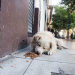 Les chiens sont bien nourris dans la rue !